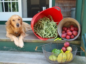 Cleo with last year's bounty