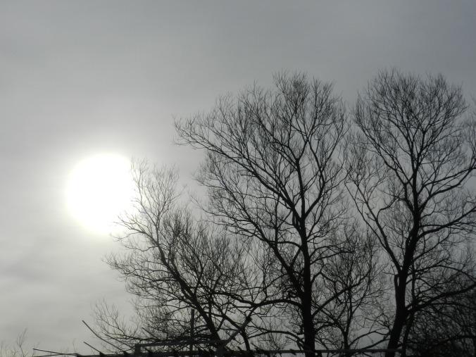 Milky winter sun