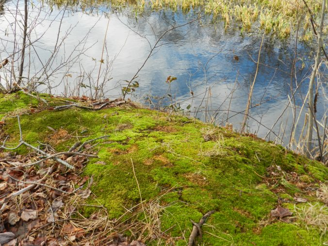 Mossy Bank at the Pond