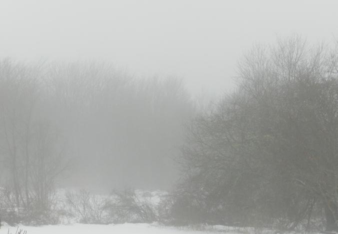 Snowfog