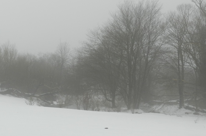 Snowfog at the pond