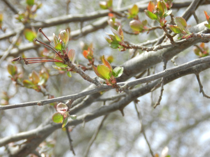 Little Leaves 3-24-12