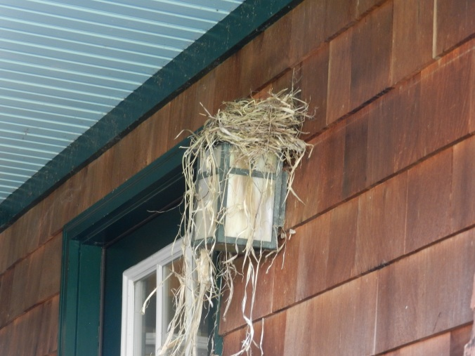 Nest atop the porch light