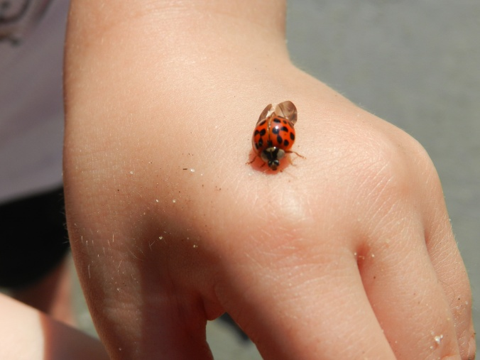 Ladybug on Angel's hand