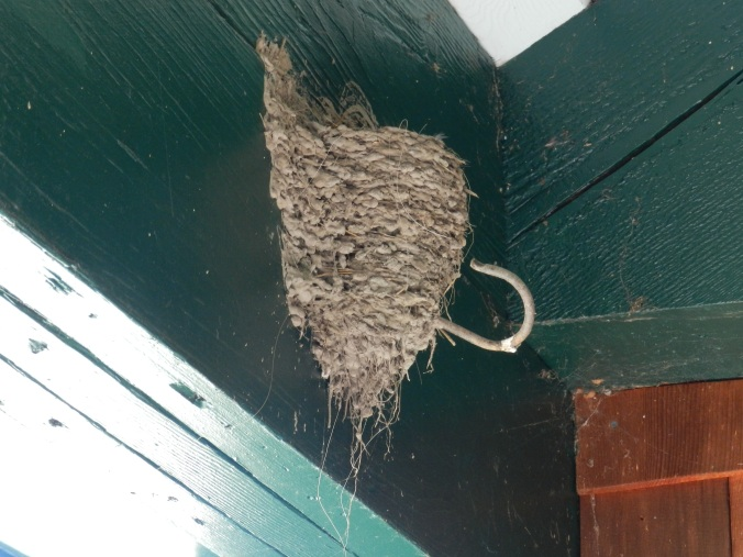 The Swallows' Nest