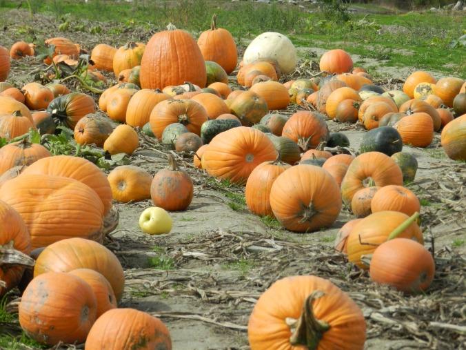 Sweetberry Farm Pumpkins