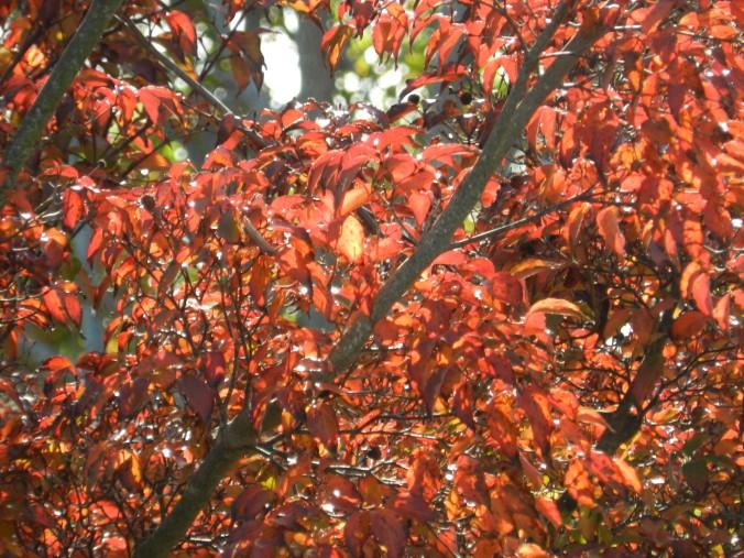 fall foliage 5