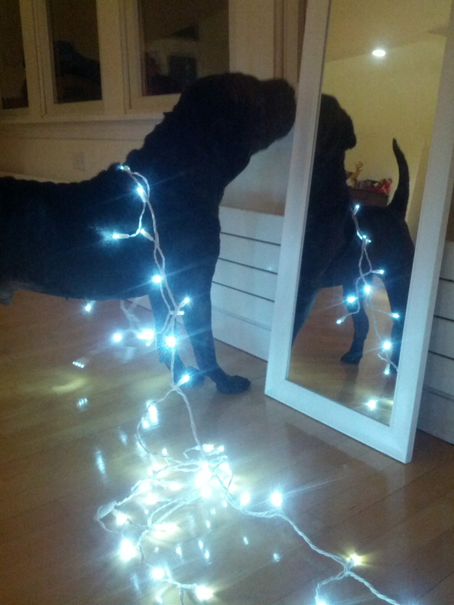 Lighting up the dog