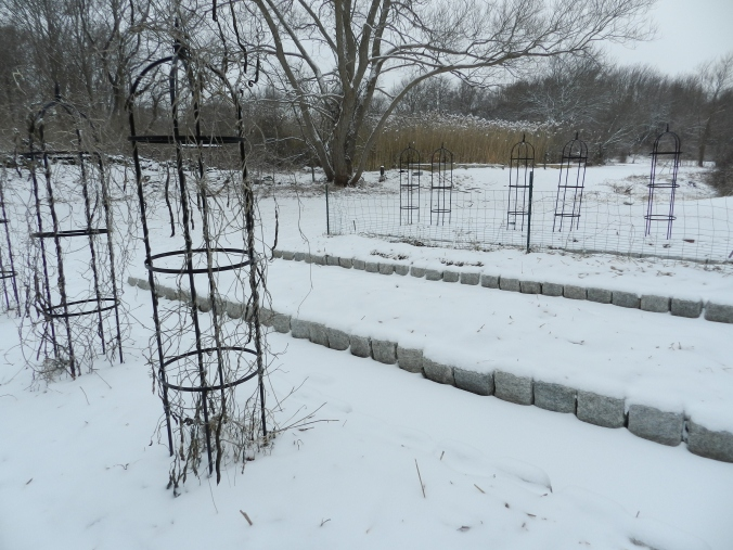 Kitchen Garden in the snow