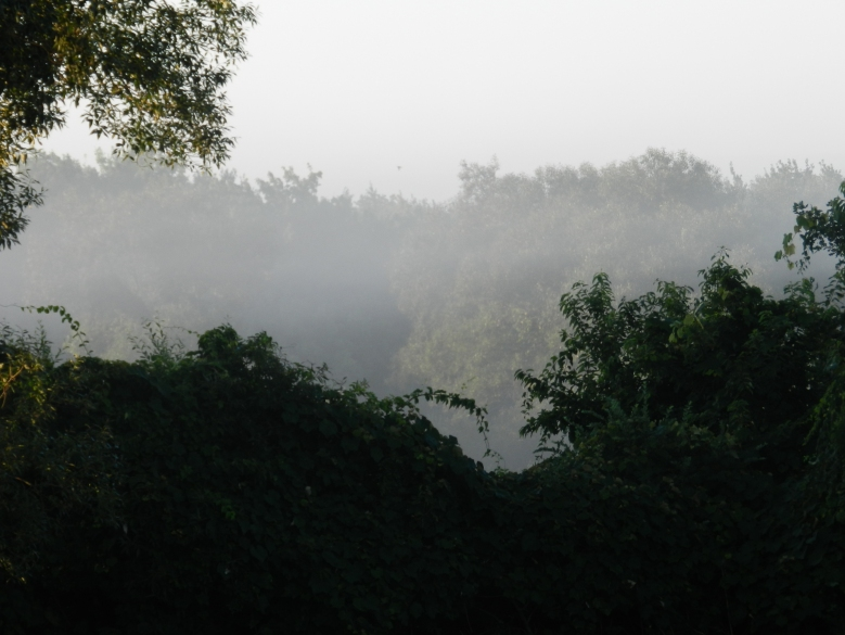 misty morning 2